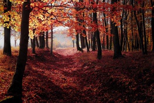 园林景观工程上全自动袋图纸机图片