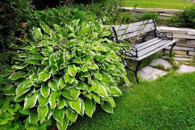 18种常见的镶边植物,你认识几种??_15