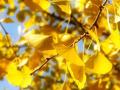 彩叶如云观瑒蕊|秋日必知的彩叶植物