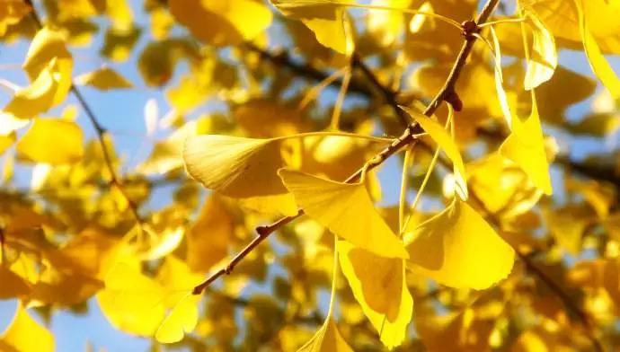 彩叶如云观瑒蕊 秋日必知的彩叶植物