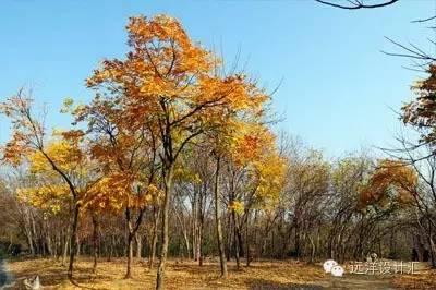 一个会种树的设计师,住宅每平方溢价3000元_12
