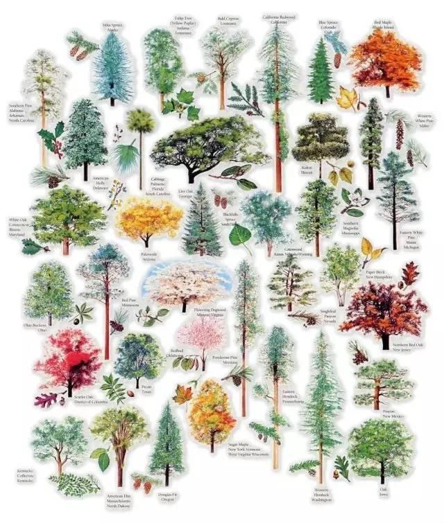 [干货]最全植物图例