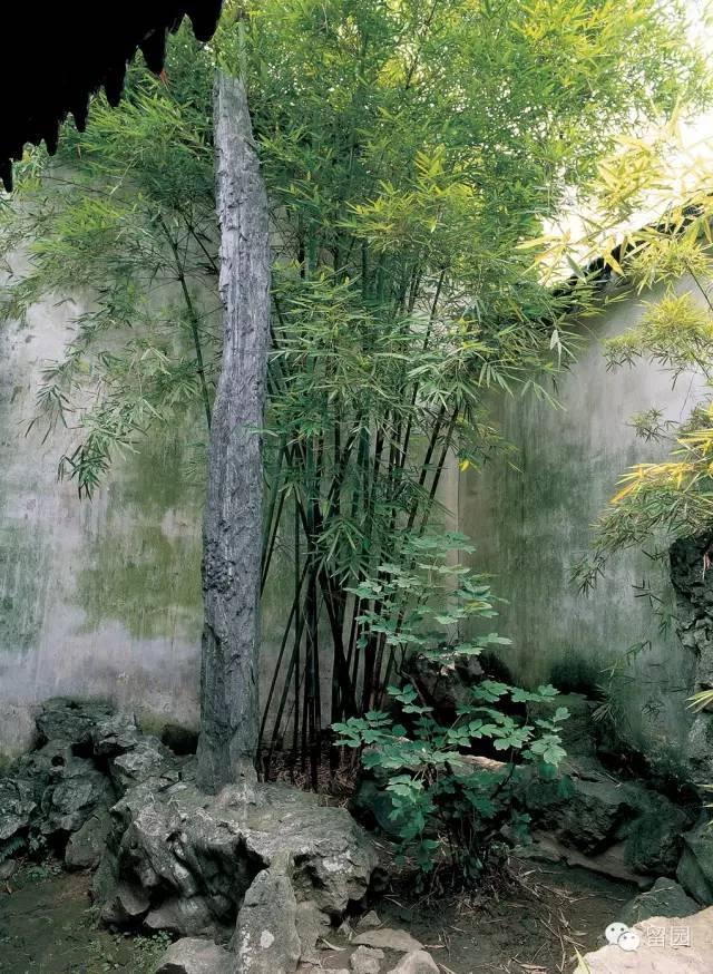 中国古典园林|留园_4