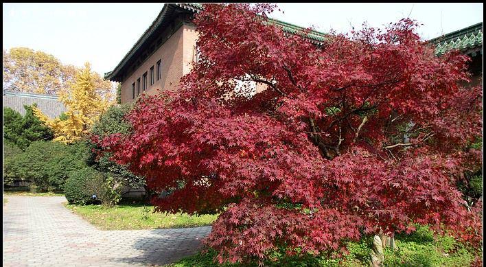 国际大师推荐现代园林植物-景观设计-筑龙园林景观 ...