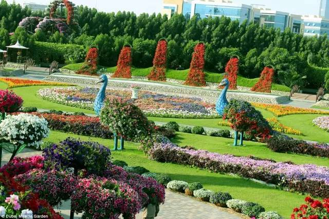迪拜的花卉展览,全世界规模最大!你肯定没看过!_15