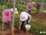 园林树木施肥注意事项