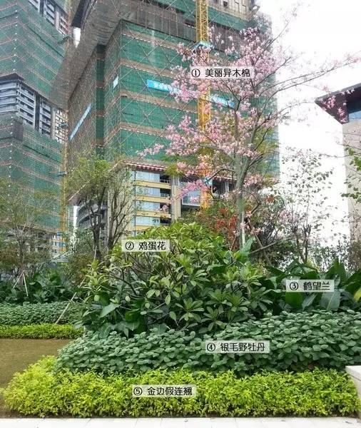 最详细图解:深圳湾三大豪宅景观植物配置!_3