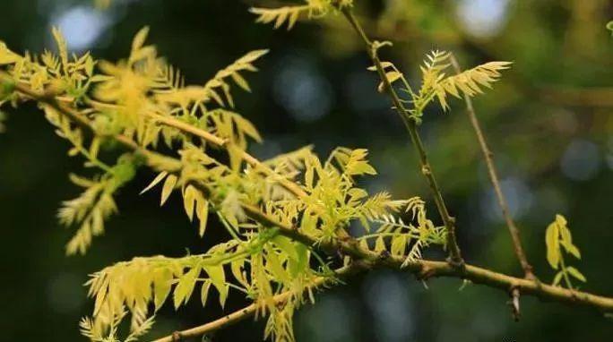 多彩观干植物,萧瑟的冬天里没有叶子照样成景!_5