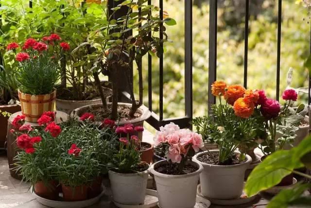 想要这样一个阳台,过小日子,看花开_10