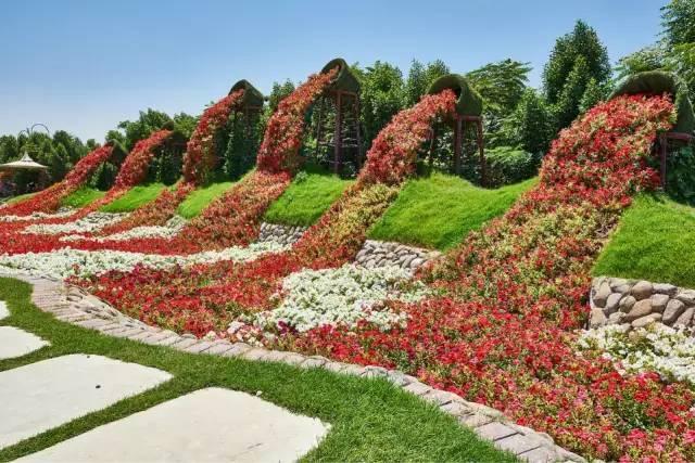 迪拜的花卉展览,全世界规模最大!你肯定没看过!_20