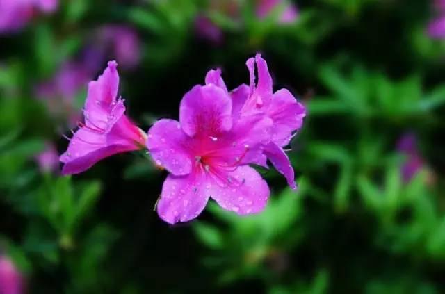 18种常见的镶边植物,你认识几种??_28