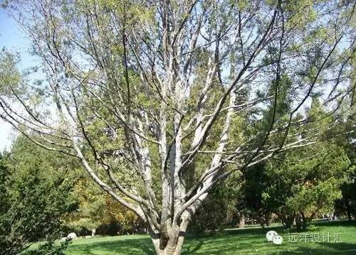 一个会种树的设计师,住宅每平方溢价3000元_20