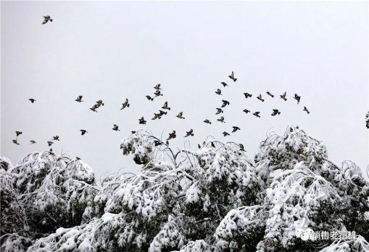 一场大雪引发低价中标血案!_1