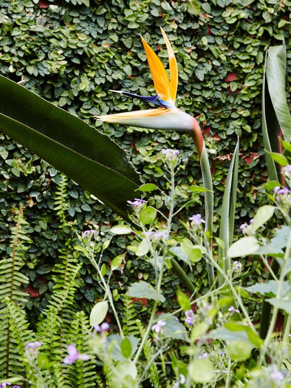 澳大利亚Fitzroy花园-7