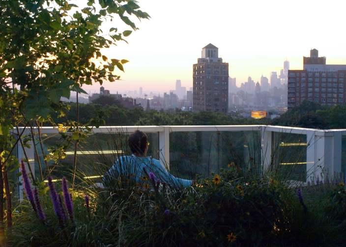 郁郁葱葱的屋顶花园-5