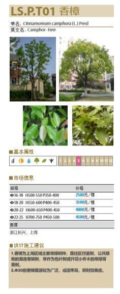 大型地产公司绿化绿皮书(做法与验收标准)-大型地产公司景观植物绿化绿皮书-9香樟植物基本属性与施工建议