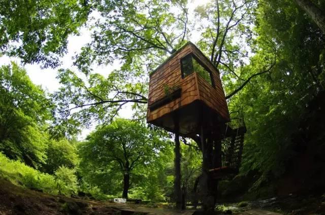 用了20年,这个大叔建了150栋树屋,每一个都像是童话世界!