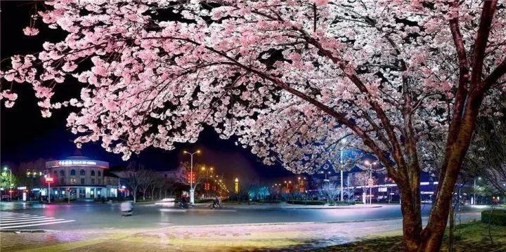 最吉祥的三十种庭院主景树_15