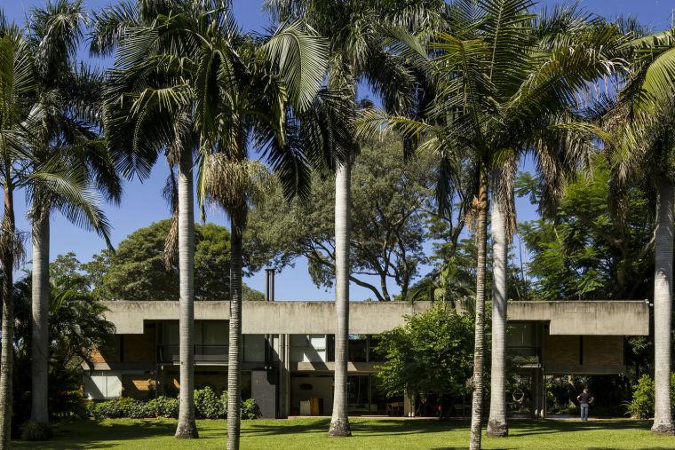 巴拉圭绿色植株覆盖的树宅