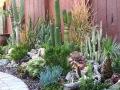 园林植物-园林景观绿化植物图片图鉴,南北方常见景观植物配置