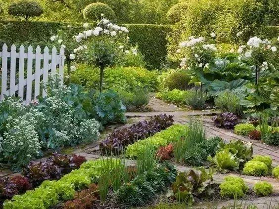 花园这样做,瞬间变最美菜园