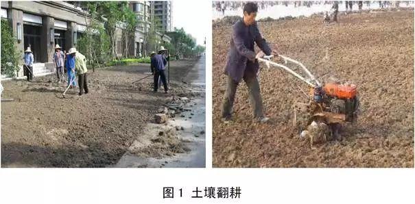 3分钟了解草坪建植方法