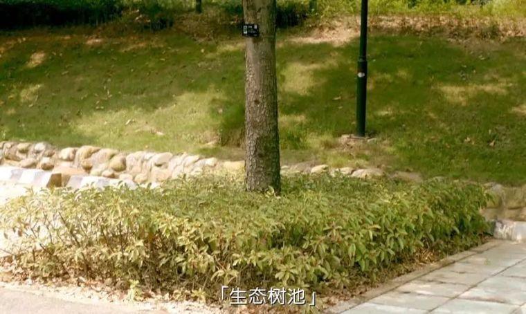 海绵城市:让您在城市里遇到大自然!_8