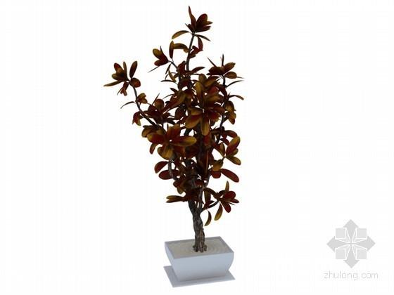 盆栽景观树3D模型下载