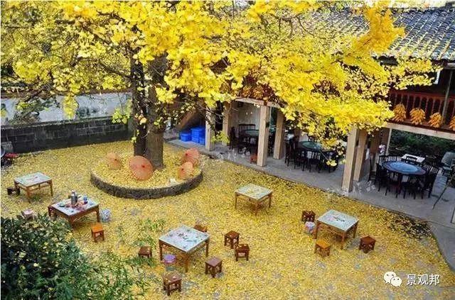 最吉祥的三十种庭院主景树_6