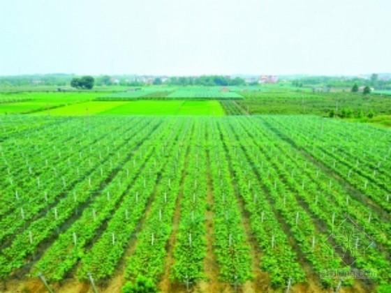 小型农田水利项目施工方案(电灌站 排灌沟渠)