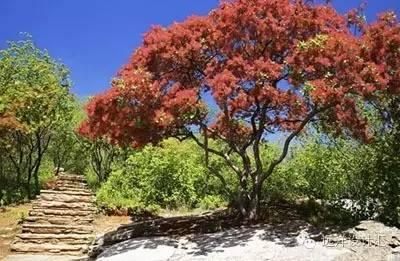 一个会种树的设计师,住宅每平方溢价3000元_9