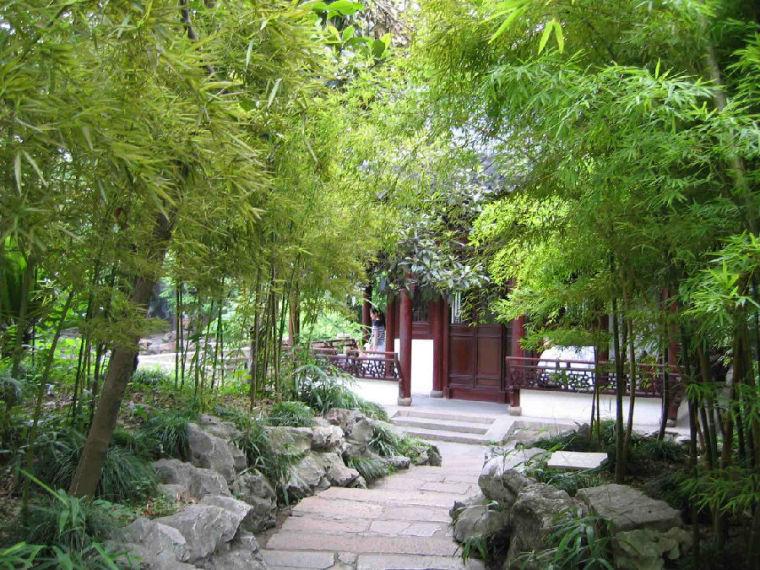 竹子在园林设计中的应用,景观设计师必备