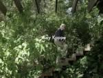 建筑大师Ray Kappe的加州树屋,看现代式颐养天年