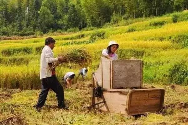 农田,才是最奢华的风景_7