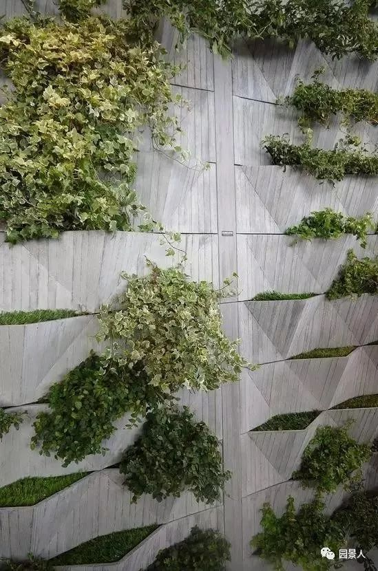 垂直绿化·会呼吸的墙壁_4