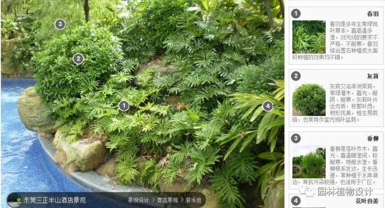 104组精彩植物配置案例(实景效果+植物品种)_12