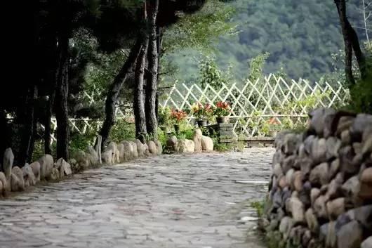 农庄,小院,民宿,建个绿篱,美哭了