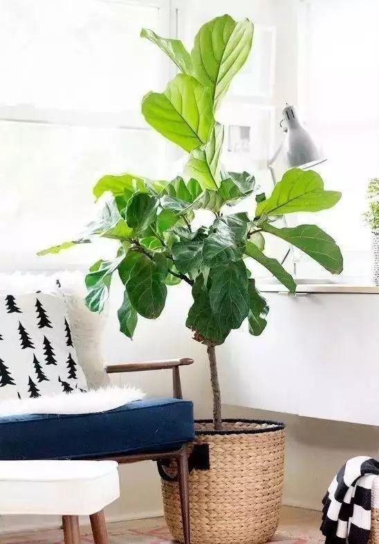 空气质量告急?这些扫霾植物排行榜中第一名竟然是......_40
