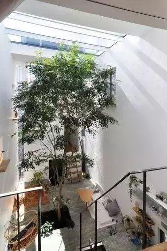 当你的房子里有一颗树_5