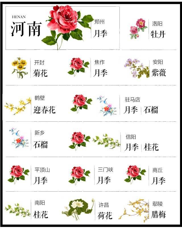 204个城市·史上最全中国各城市市花_16