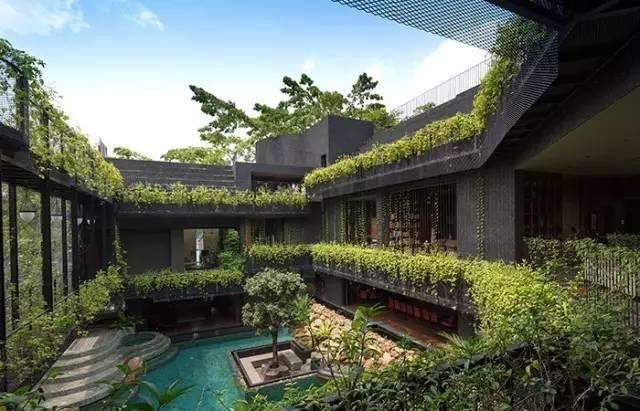 在自己家的屋顶上建梯田,送城市一份乡村之乐!_31