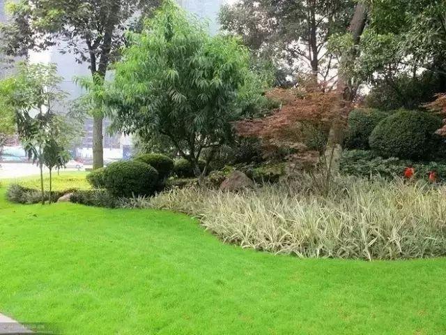 干货:10分钟让物业小区植物景观提升五个档次