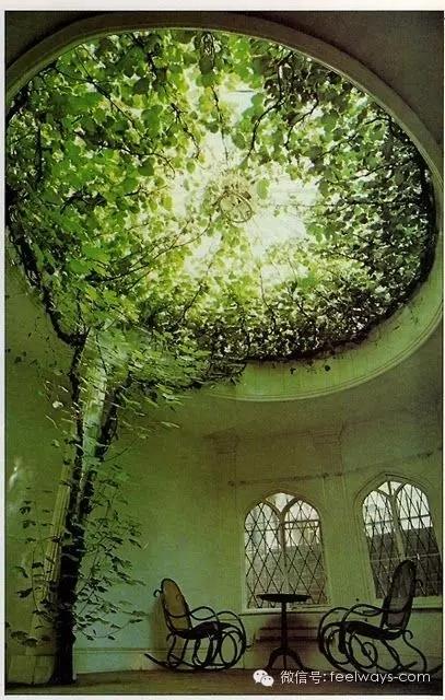 藤本植物[攀附的美丽]-640.webp (2).jpg