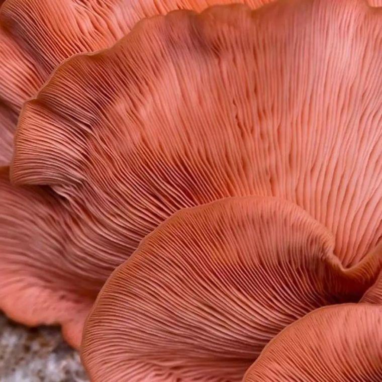 色彩界老大发布2019年流行色:活力珊瑚色_3