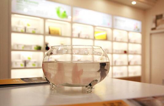 糯米植物涂料参展广州家博会,演绎健康家装新选择