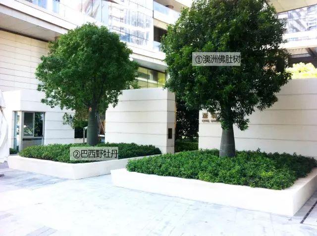 最详细图解:深圳湾三大豪宅景观植物配置!_15