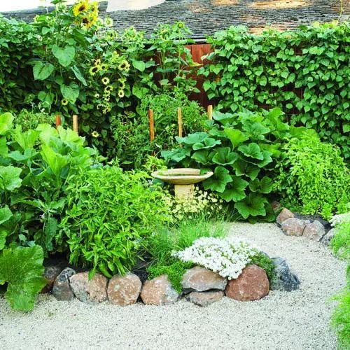 老了,我想和你有个菜园子。_2