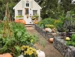 有个院子真好,种上蔬菜花草