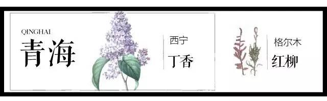 204个城市·史上最全中国各城市市花_6