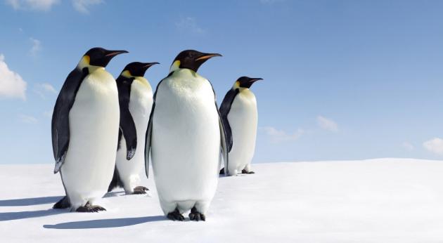 没有空调和暖气,动物们有自己的奇葩取暖方法